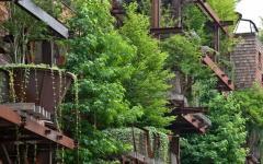 arbres vivants immeubles écologique