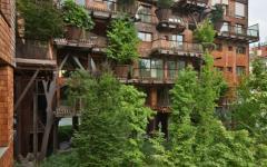 bâtiment vert arbre écologique