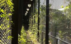 couloirs verdoyants belle demeure familiale originale