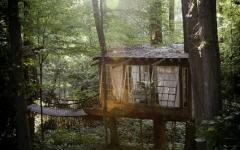 maison en bois vue de loin dans les arbres verts